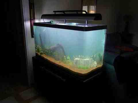 Comment bien démarrer un aquarium?