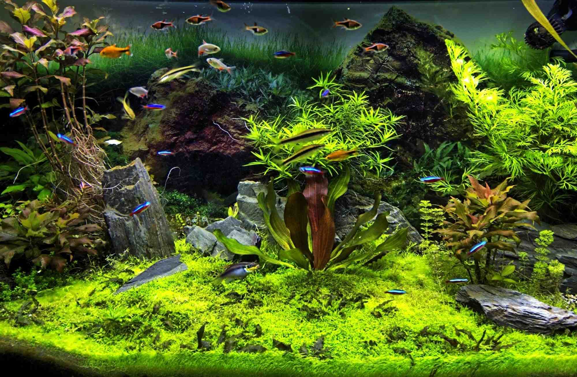 Comment choisir un aquarium?
