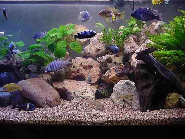 Comment coller des pierres dans un aquarium?