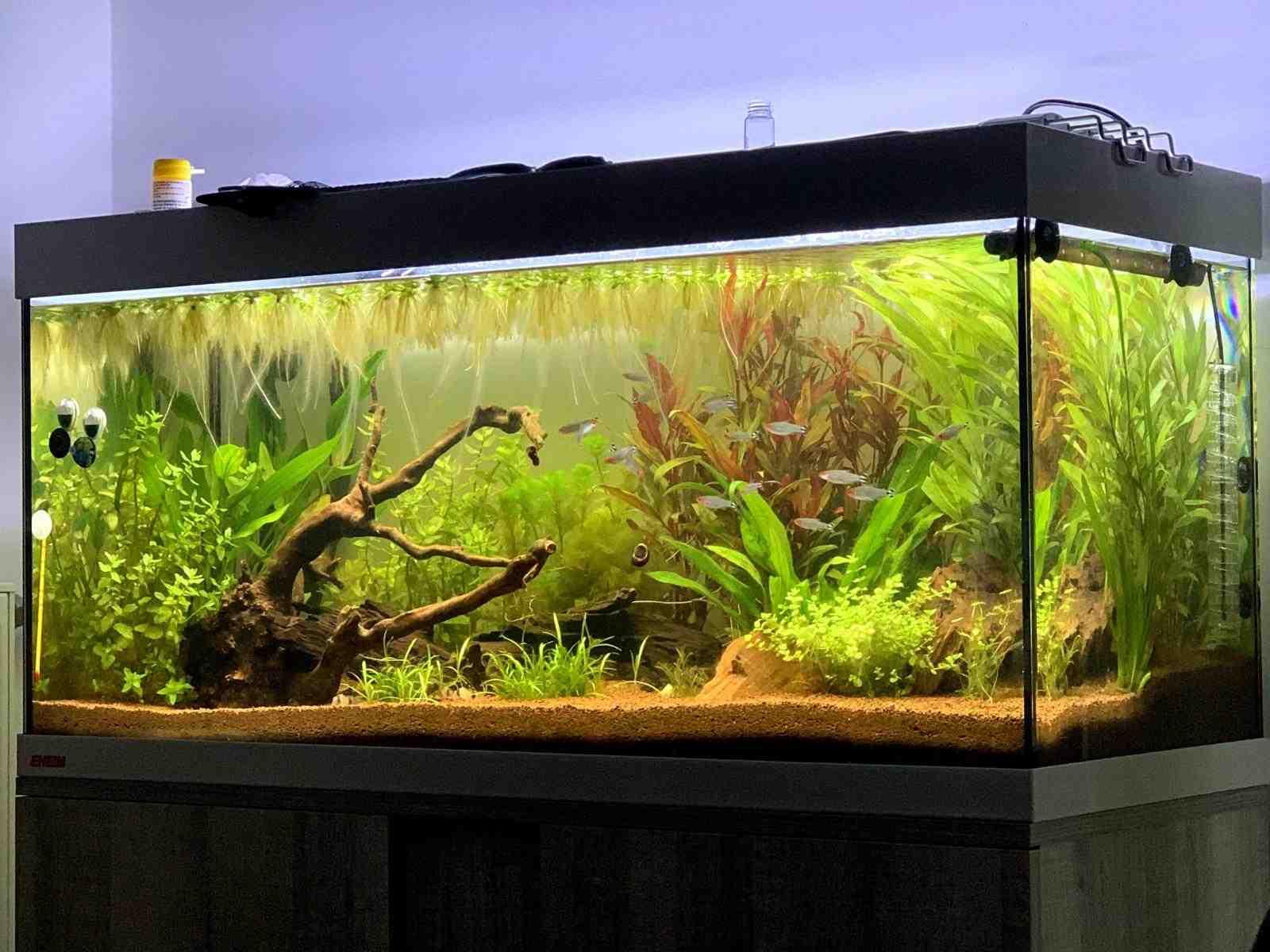 Comment créer un aquarium Amazon?