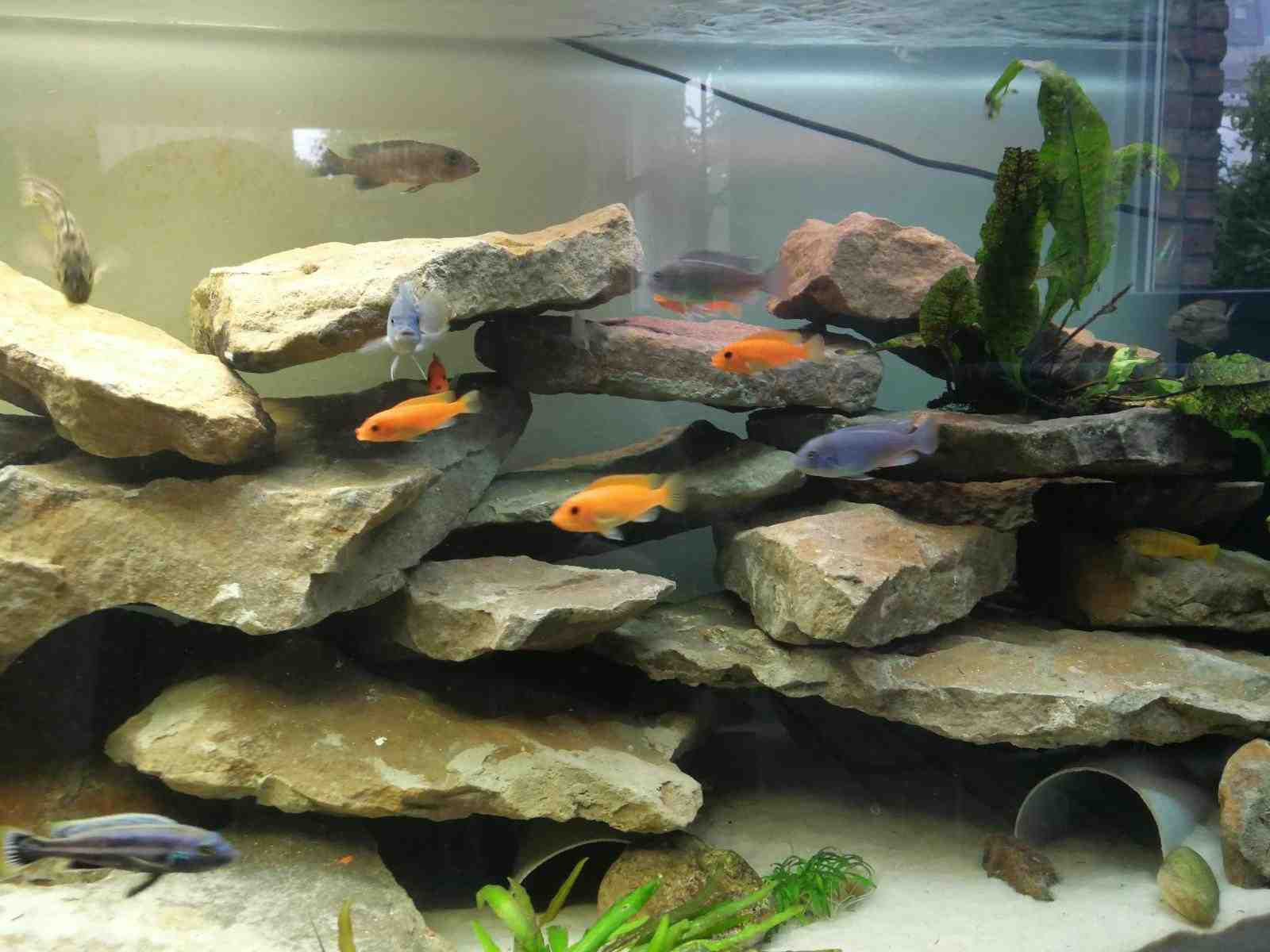 Comment faire de fausses roches pour les aquariums?