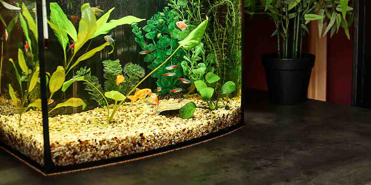 Comment faire le décor d'un aquarium ?