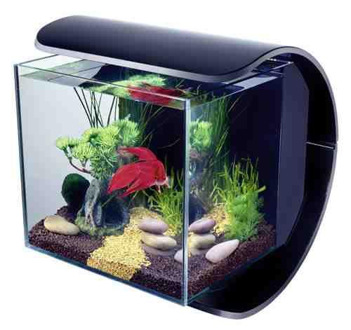 Comment faire son propre aquarium?