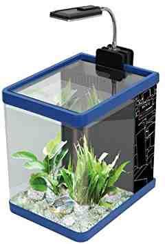 Comment faire un petit aquarium naturel?