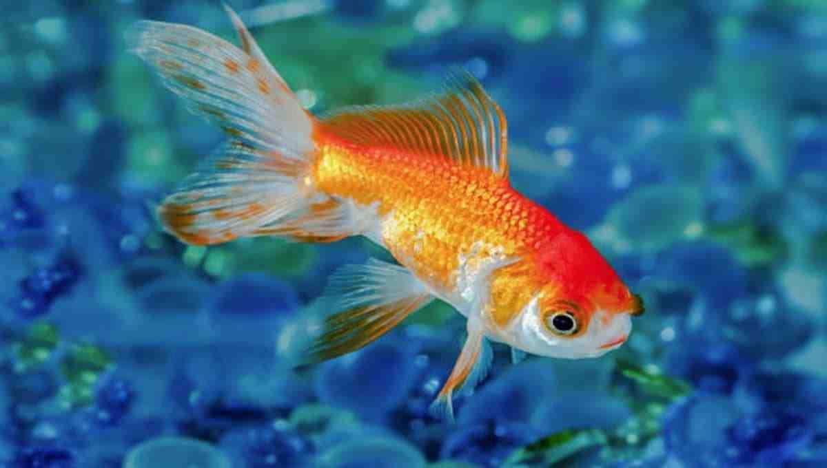 Comment garder une eau d'aquarium propre?
