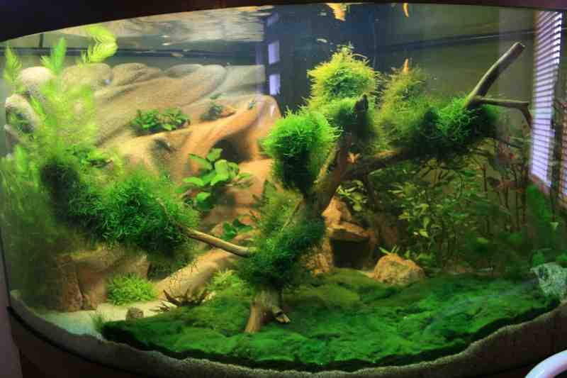 Comment obtenir un bel aquarium?