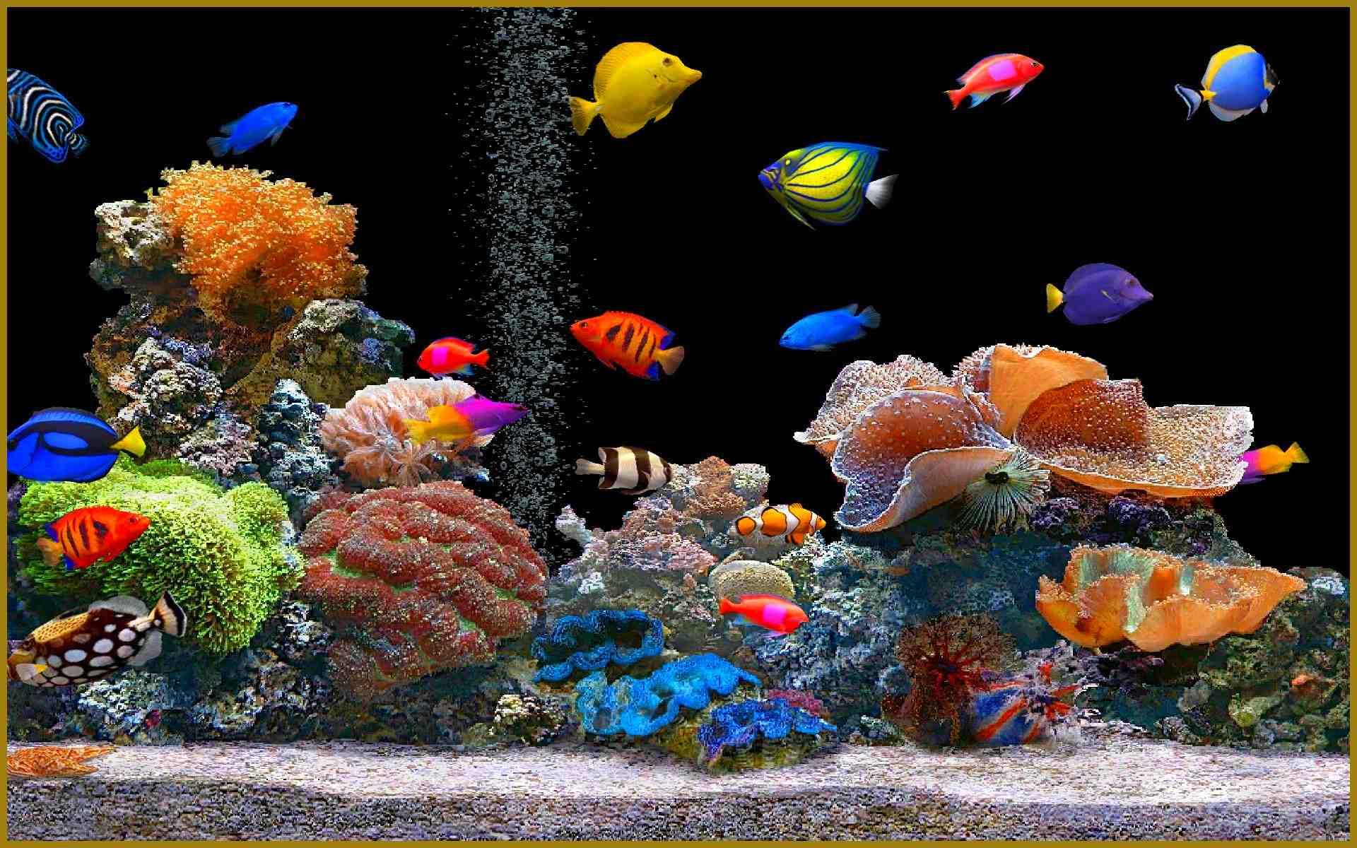 Comment oxygéner l'eau d'un aquarium sans pompe?