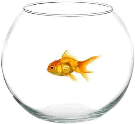 Comment prendre soin du poisson dans un bol?