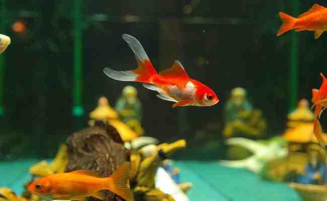 Comment savoir si un aquarium est vraiment de l'oxygène?