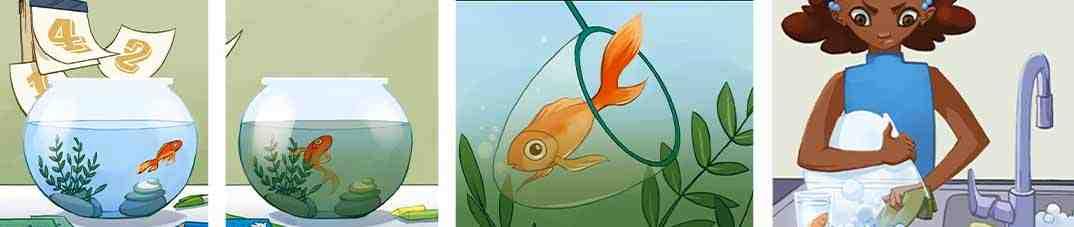 Comment un poisson vous aide-t-il à respirer?
