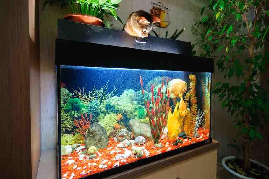Où dois-je mettre mon poisson rouge?