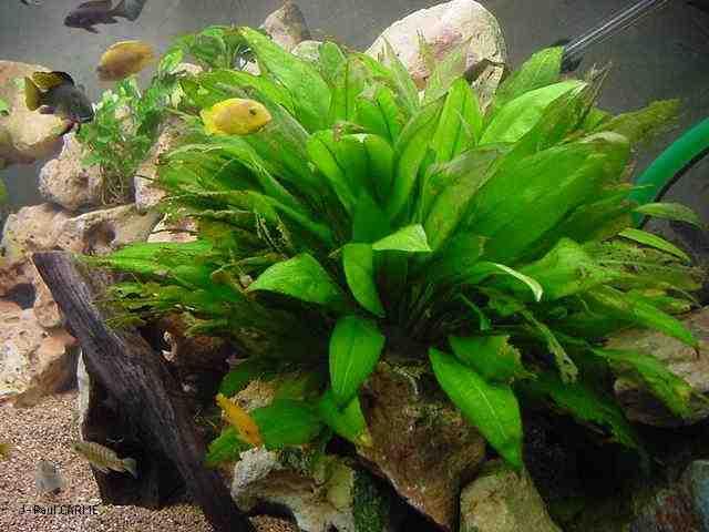 Quand mettre les plantes dans l'aquarium?