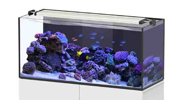 Quel aquarium acheter ?