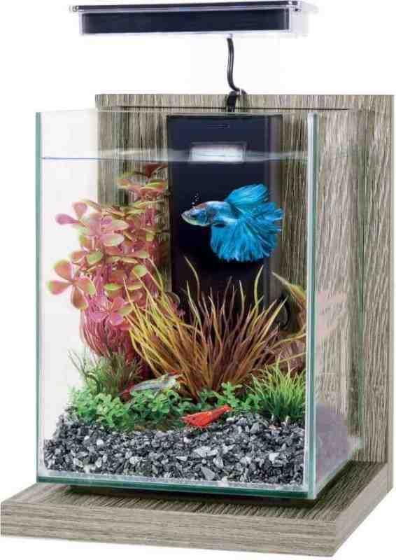 Quel aquarium pour deux poissons rouges?