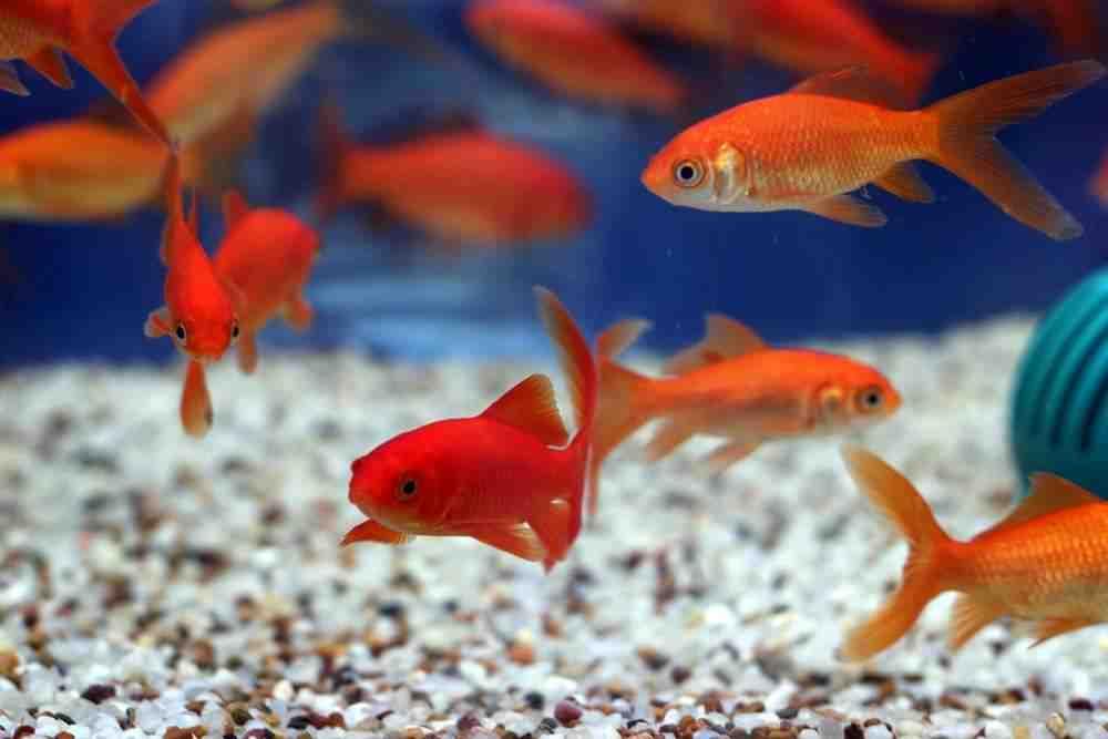 Quel est le meilleur aquarium pour les débutants?