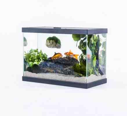 Quel est le prix d'un aquarium?