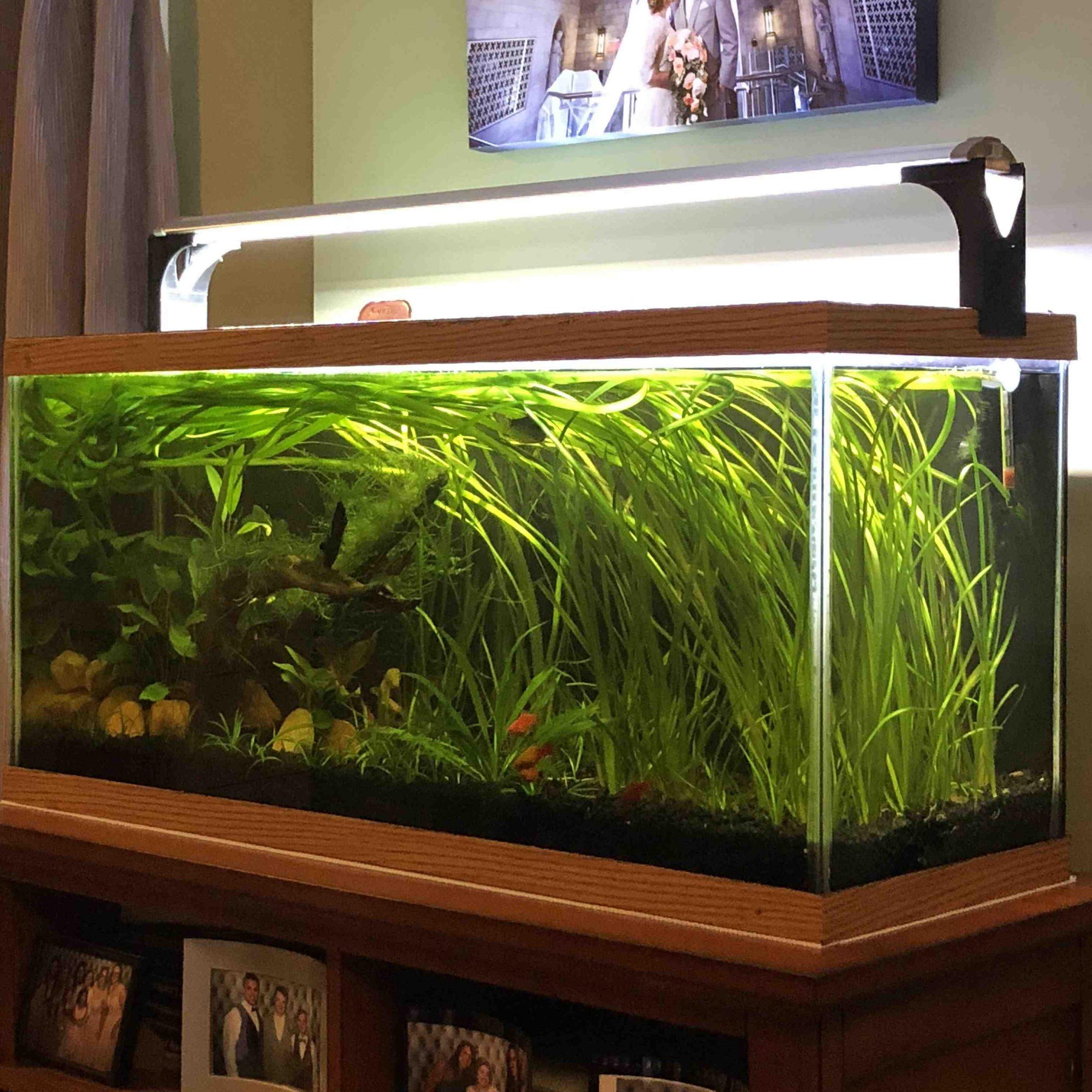 Quel genre d'aquarium?