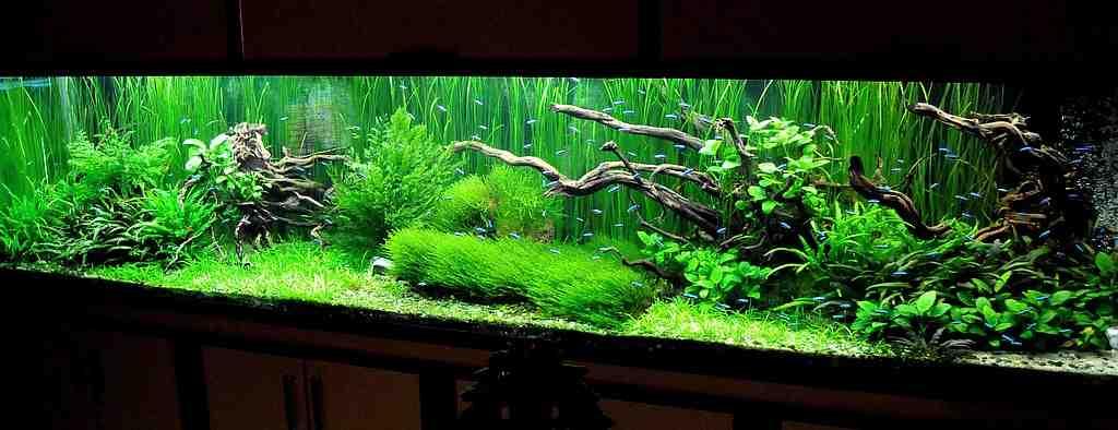 Quel genre de plante d'aquarium sans sol nutritif?