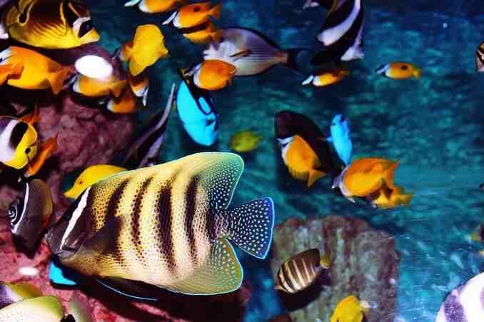 Quel genre de poisson pour un aquarium de 60 litres?