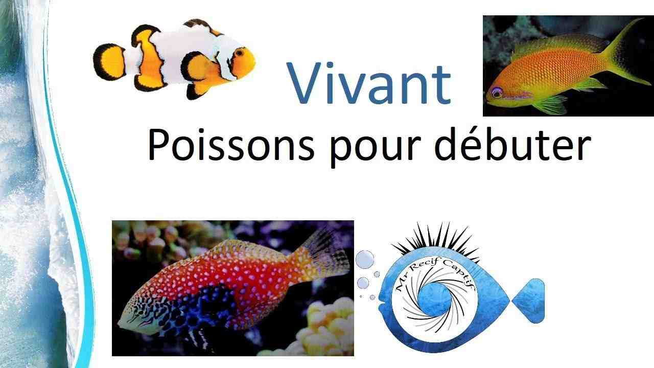 Quel poisson dans un mini aquarium?