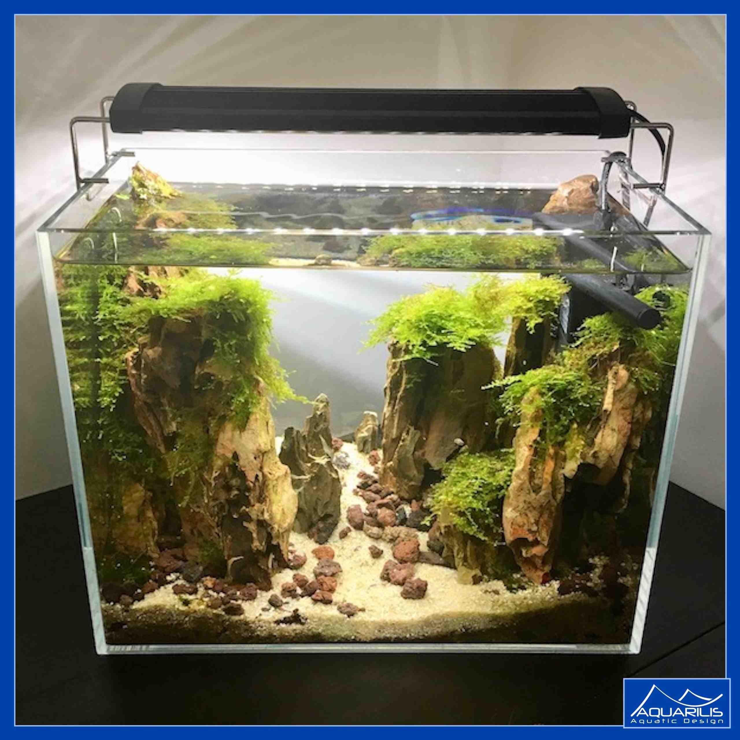 Quel poisson dans un nano aquarium de 30 litres?