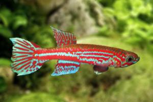 Quel poisson mettre dans un aquarium de 250 l?