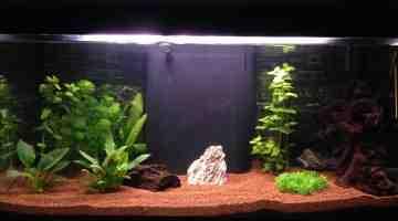 Quel poisson pour debuter un aquarium ?