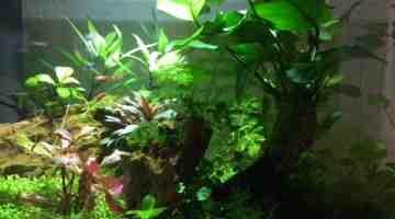 Quel poisson pour un aquarium de 10 l?