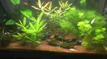 Quel poisson pour un aquarium de 200 l?