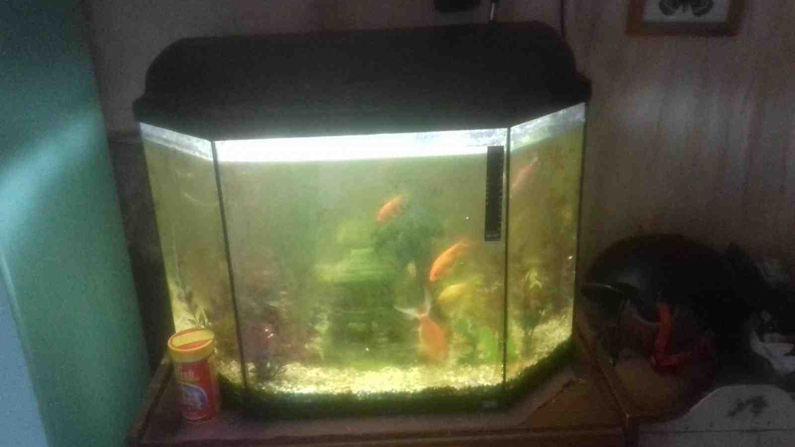 Quel poisson pour un aquarium de 30 litres?
