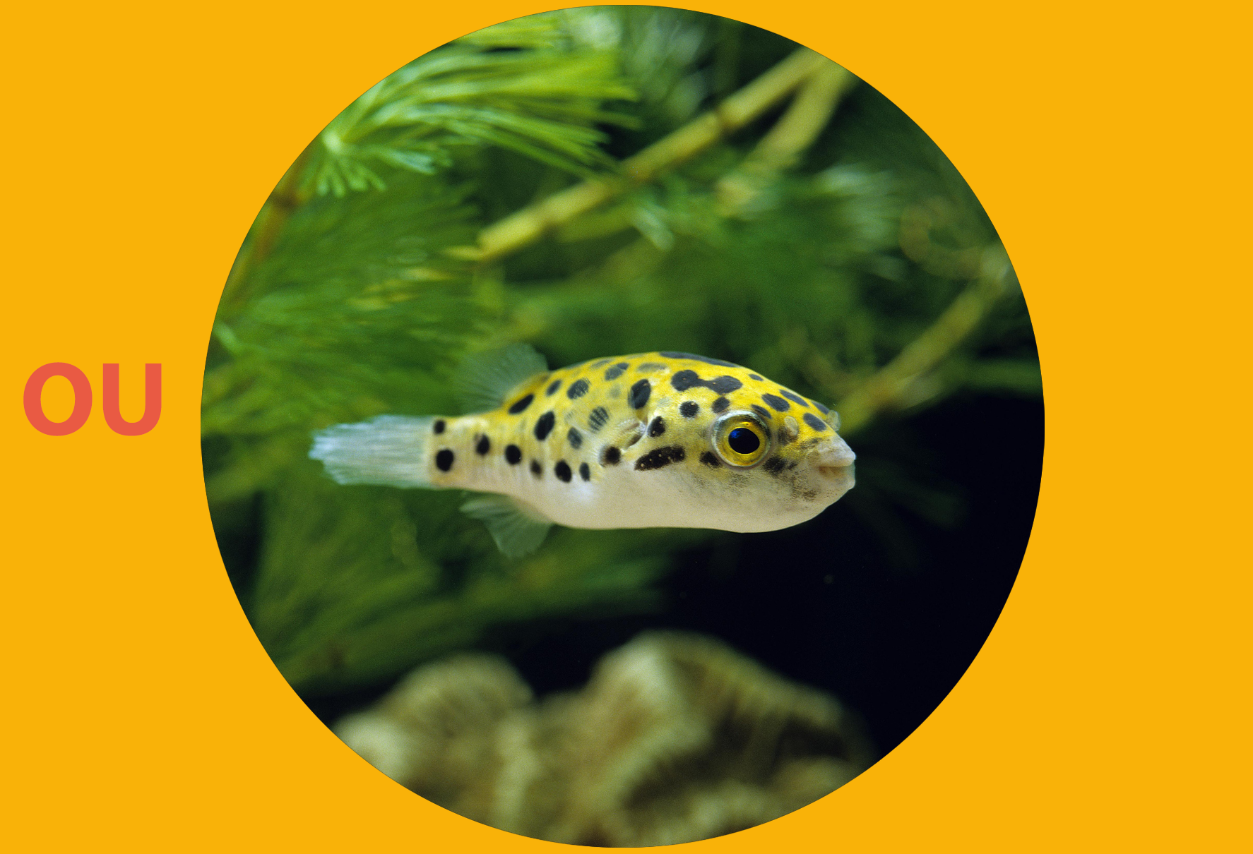 Quel poisson pour un aquarium de 40 l?