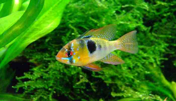 Quel poisson pour un premier aquarium?