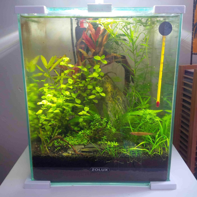 Quel type de poisson dans un nano-aquarium?