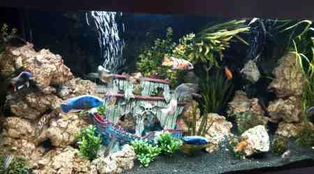 Quelle est la couleur de fond d'un aquarium?