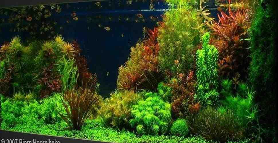 Quelle est la taille idéale de l'aquarium?