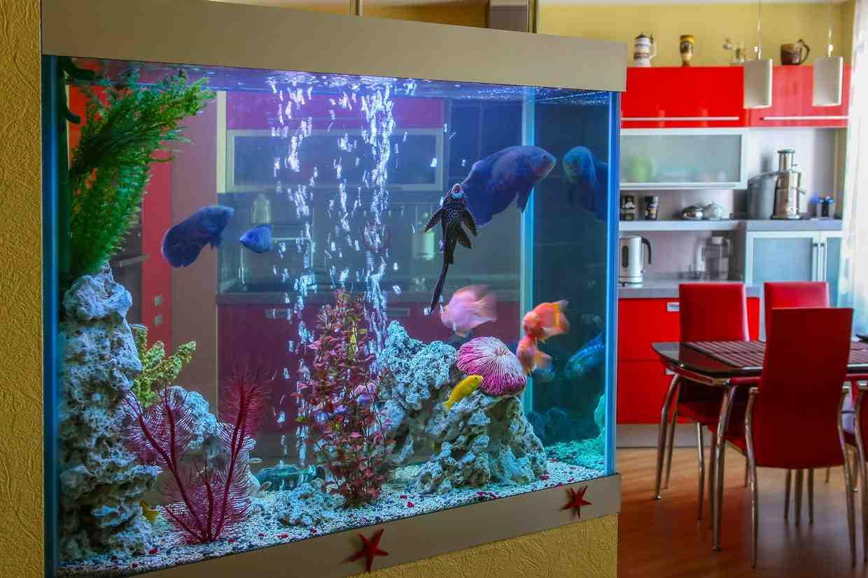 Quelle est la taille idéale pour un aquarium?