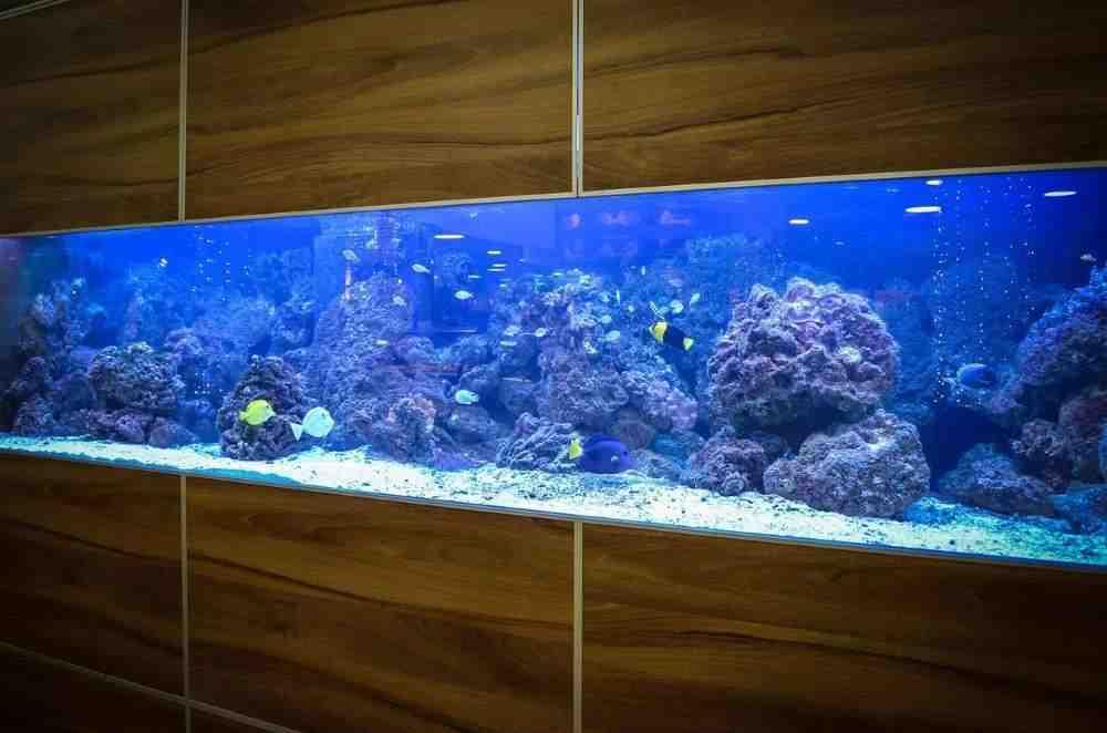Quelle forme d'aquarium?
