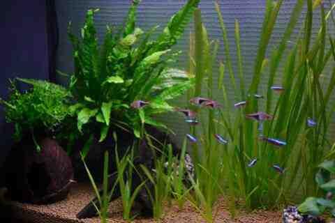 Quelle pierre pour un aquarium amazonien?