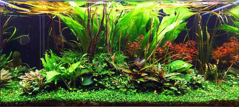 Quelle plante d'aquarium sans sol nutritif?