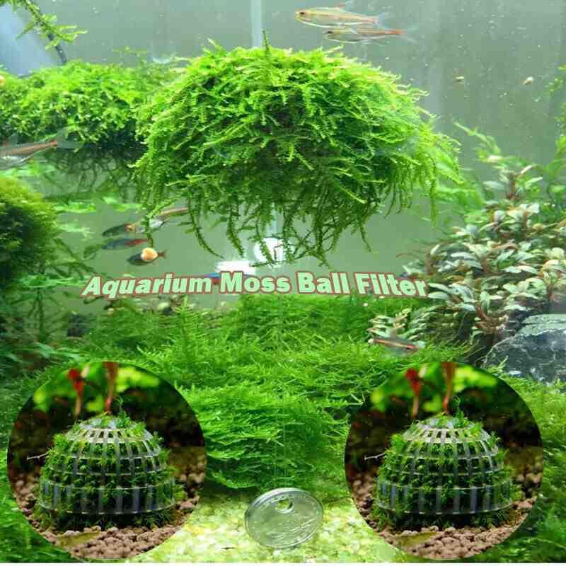 Quelle plante herbacée d'aquarium?
