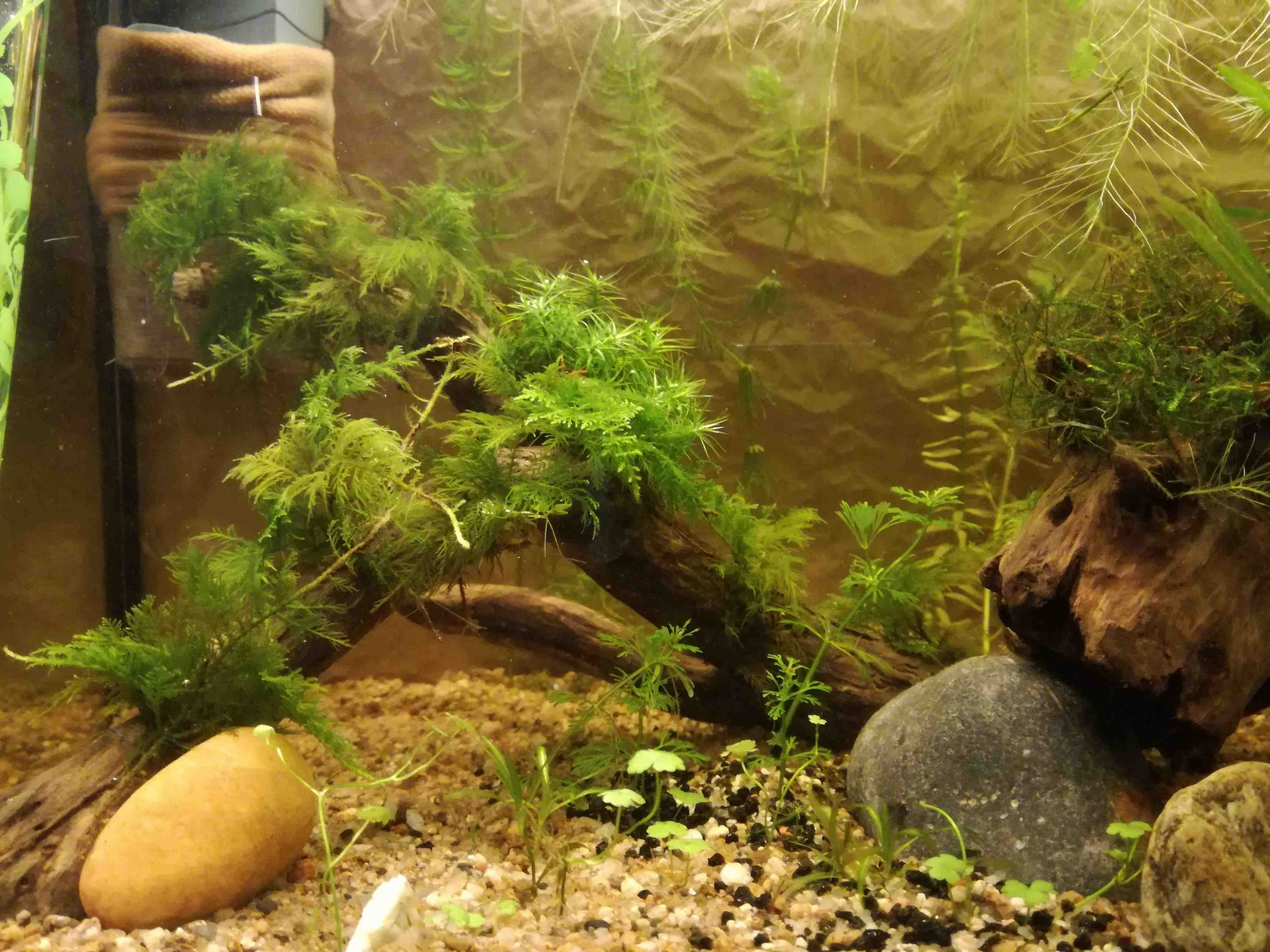 Quelle plante mettre dans un aquarium ?