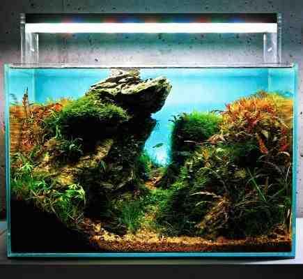 Quelle plante mettre dans un aquarium?