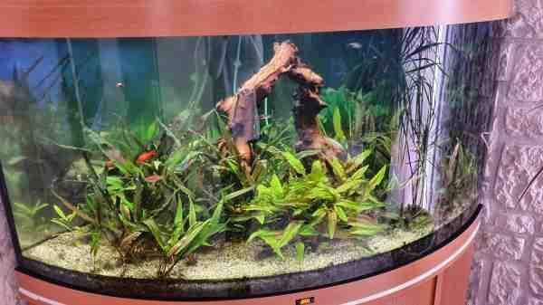 Quelle pompe pour aquarium 450 L?