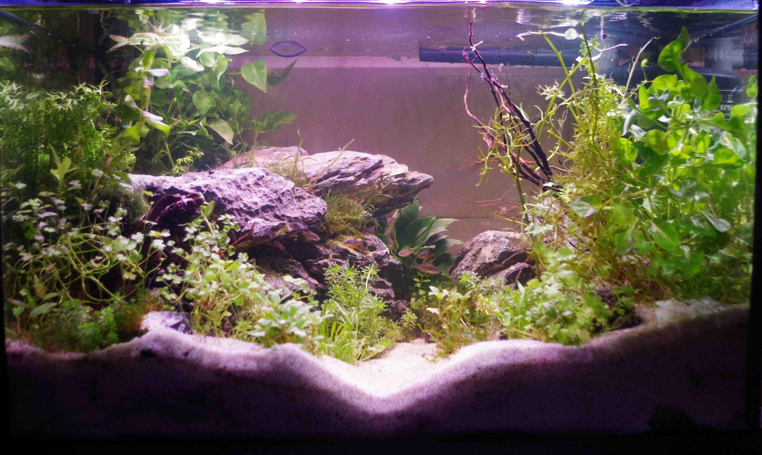 Quelle racine pour un aquarium amazonien?