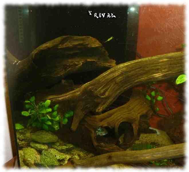 Quelles plantes pour l'aquascaping?