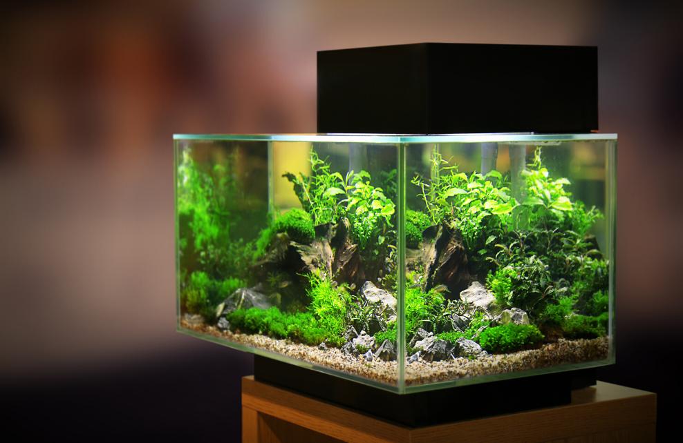 Quelles plantes pour un aquarium amazonien?