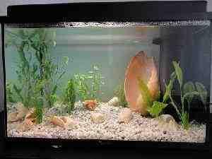Quels poissons pour un aquarium de 60 litres ?