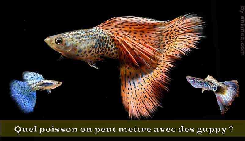 Quels poissons pouvons-nous mettre dans une lumière fluorescente?