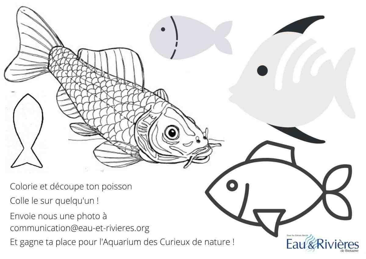 Quels sont les plus beaux poissons?