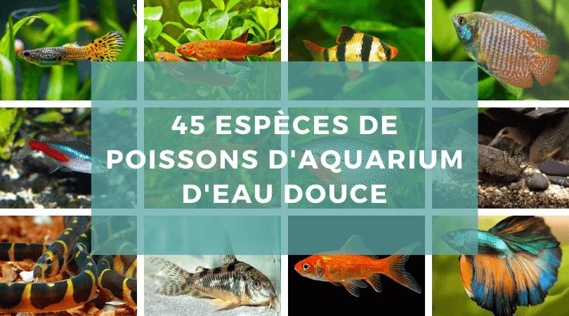 Quels sont les poissons les plus coriaces d'un aquarium?